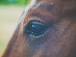 Experiencia de Crecimiento a través del caballo